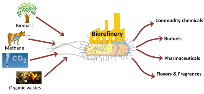 """Biorefinery diagram. Biomass, methane, CO2 and organic wastes are processed by a biological """"factory"""" and turned into commodity chemicals, biofuels, pharmaceuticals and flavors or fragrances."""
